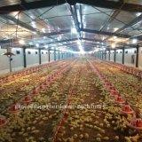 Оборудование цыплятины полного комплекта автоматическое для продукции бройлера