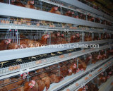 Cage automatique/semi-automatique de poulet de volaille pour la ferme d'oiseau