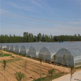수경법 시스템/농업 온실은 천막 장비, 정원 빛을내는 플랜트 천막을 증가한다