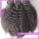 Pacotes de trama Curly africanos do Afro da forma da qualidade superior 6A+