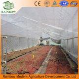 100% Vidrio Transparente que cubre el invernadero Precio considerable