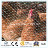 Qualität Galvanzied sechseckiger Maschendraht/sechseckige Draht-Filetarbeit