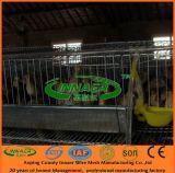 Gaiola de galinha da exploração avícola