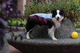 Roupas impermeáveis Pet cão Produto