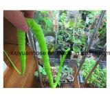 2016 boyau agricole coloré portatif flexible TV de boyau du nouveau produit de la poche chaude magique flexible Snake25/50/75/100FT de l'eau