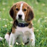 Perseguidor do GPS com o colar para o cão/gato/animal de estimação