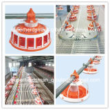 Breeder House를 위한 가득 차있는 Set Automatic Poultry Farming Equipment