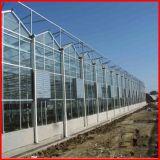 Venta caliente de efecto invernadero multi-Span Commerical Hoja de PC jardín en venta