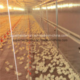 Prefabricated Steel Poultry House Design 및 Construction