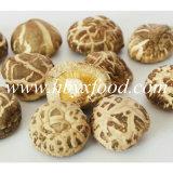 Cogumelo saudável fresco produtos agrícolas secados
