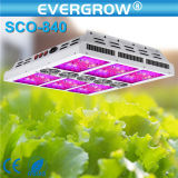 Indoor GrowingのためのEvergrow Saga LED Grow Lights 140-840W Step Switchable LED Grow Lights