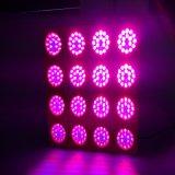 LA PANNOCCHIA LED di alto potere 300W 600W 1200W coltiva l'indicatore luminoso