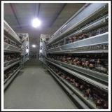 層電池ケージを耕作している家禽の鶏