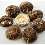 Fungo di Shiitake liscio del migliore alimento agricolo di qualità