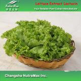 Extrait naturel de laitue de 100% (Lactucin/4 : 1~20 : 1)