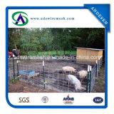 Comitati pratici del fornitore dorato/comitati saldati del bestiame del collegare