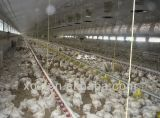 Camera automatica dell'azienda agricola di pollo