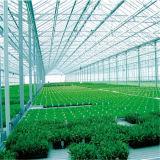 Invernadero de la mejor calidad de la venta de la fábrica solo del surtidor de China