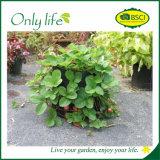 Il sacchetto esterno quadrato della piantatrice del giardino di Onlylife economico coltiva il sacchetto