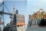 Transporte do mar/recipiente