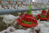 Camera di griglia alimentante a terra dell'azienda agricola di pollo