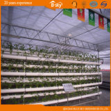 Polycarbonate durável Sheet Green House para Planting Vegetables
