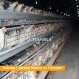 Tianrui Geflügel, das Gerät anhebt, das ein Typ automatisches Eihuhn einsperren
