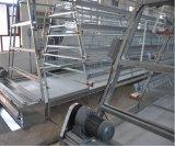 Système automatique neuf de matériel de cage de poulet d'éleveur de ferme avicole (un type bâti)