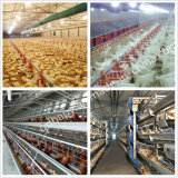 Helle Steel Broiler Geflügelfarm und Broiler Poultry Equipment