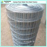 Alta calidad Galvanized Bird Cage Welded Wire Mesh para Sale