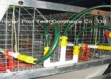La strumentazione automatica delle gabbie delle gabbie di batteria dell'azienda agricola della pollastra calda/freddo ha tuffato il filo di acciaio galvanizzato (un tipo)