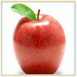 깡통에 있는 통조림으로 만들어진 깎뚝썰어진 Apple