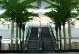Высокое качество искусственной пальмы кокосов Gu5435003362361344793452