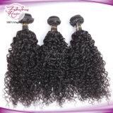Haarpflegemittel Wholesale indische Jungfrau-menschliches lockiges Haar