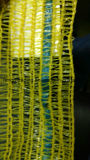 Bolso púrpura del acoplamiento de los PP Raschel para los bolsos plásticos de empaquetado del acoplamiento de Raschel del HDPE del fabricante de China de la berenjena de las patatas de las cebollas para las frutas