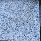 Granito grigio Polished G603 della fabbrica della Cina per le mattonelle di pavimento
