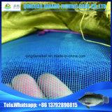 سميكة [فيش نت], [هبا] سمكة يزرع [ب] شبكة