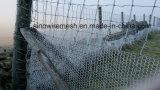 Rete fissa esagonale del reticolato della rete metallica di Sailin