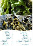 El extracto de la alga de Brown hace la piel más liso y el elástico