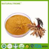 Poudre d'extrait de mycélium Cordyceps de la meilleure qualité chinoise