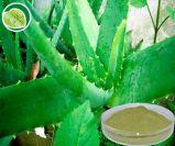 Polisacáridos naturais do aloés do extrato 100% de Vera do aloés da alta qualidade, Aloin