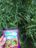 ショウガによってUnigrowの扱われる有機肥料