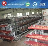 Huhn-Rahmen/Legen des Batterie-Henne-Rahmens/der Geflügel-landwirtschaftlichen Maschinen