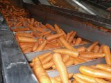 Grado fresco della carota S del nuovo raccolto