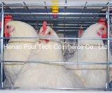 Cage de poulet d'éleveur d'exploitation d'élevage avec le système automatique de matériel (un type bâti)