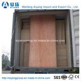 Matériaux de construction de panneaux muraux Contreplaqué professionnel bon marché pour meubles