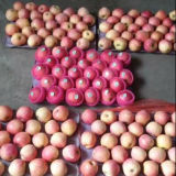 Good Quality (조사 100-125)를 가진 중국 Fresh Red FUJI Apple