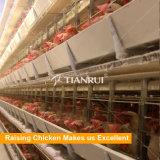 Cage galvanisée plongée chaude automatique de poulet pour la couche