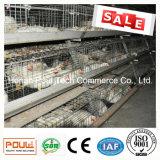 Matériel de cage de poulet à rôtir pour la ferme avicole