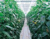 Ventilator van de Uitlaat van het Type van China de Hangende voor Groente die Serre plant
